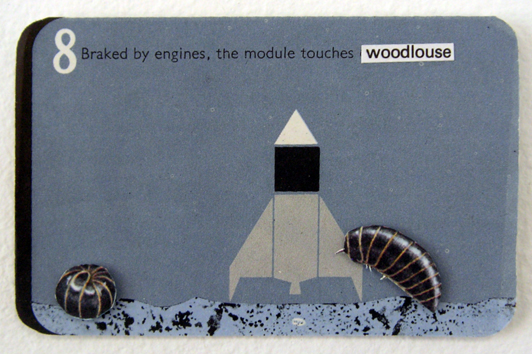 08 woodlouse