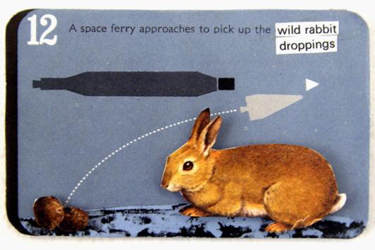 12 wild rabbit droppings
