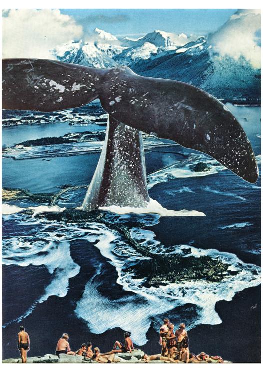 LucyDyson_WhaleWatchers_2015